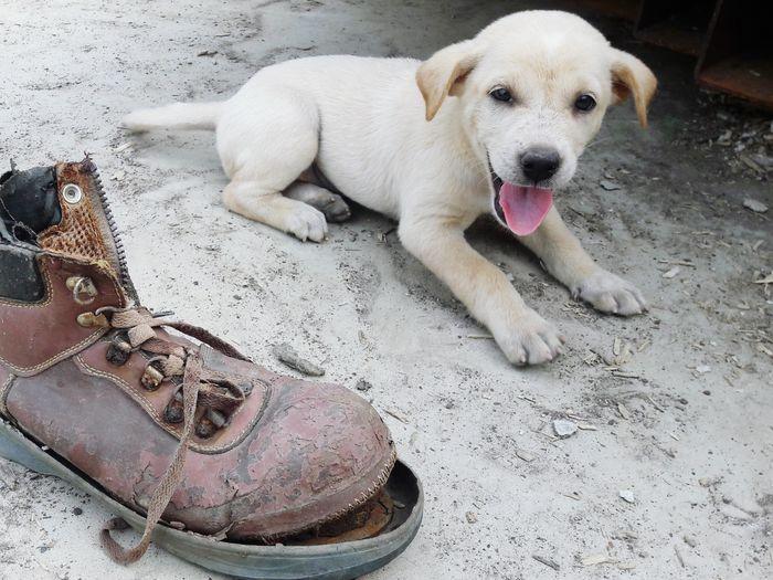 Pets Beach Dog