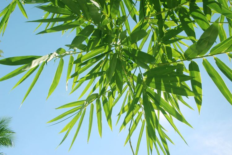 Close-Up Of Plant Leaves Against Sky