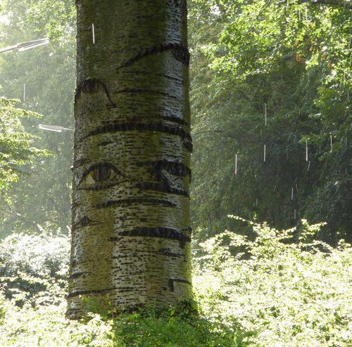 Rain Or Shine Sunshine and Rain Raindrops Eye4photography  Tree TreePorn Tree_collection  Green Green Green!  Nature On Your Doorstep Beauty In Nature