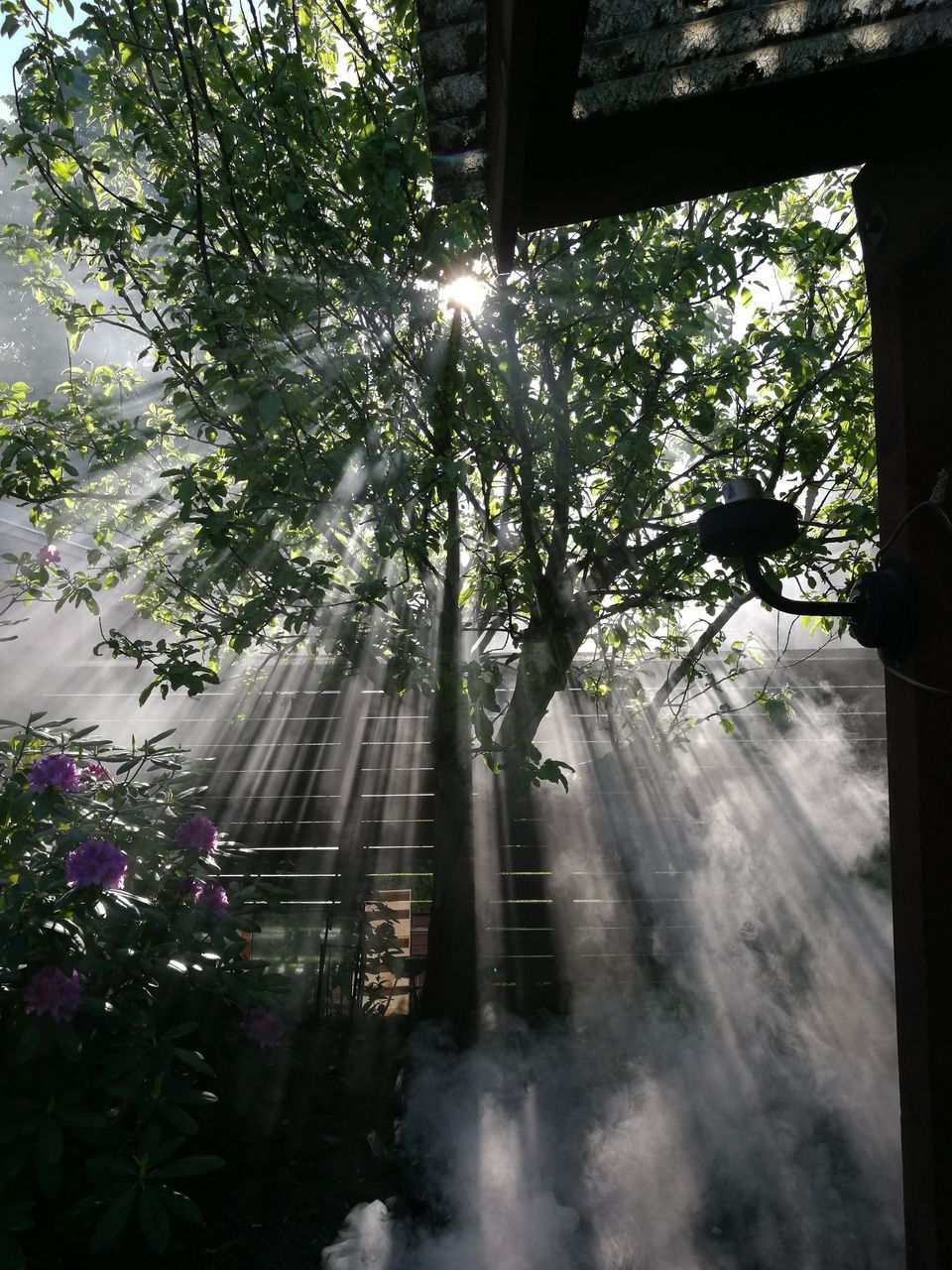 tree, nature, sunbeam, growth, no people, tranquility, day, sunlight, beauty in nature, outdoors, freshness
