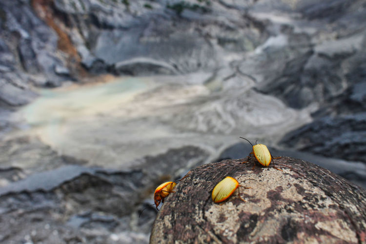 Mt. Tangkuban Parahu, Jawa barat, Indonesia. Rock Solid Rock - Object Animal Wildlife Animals In The Wild Animal Themes One Animal Animal Nature Day Close-up No People Focus On Foreground Outdoors Beauty In Nature Land Selective Focus Invertebrate Yellow Rock Formation Marine EyeEmNewHere Beauty In Nature Nature EyeEm Best Shots