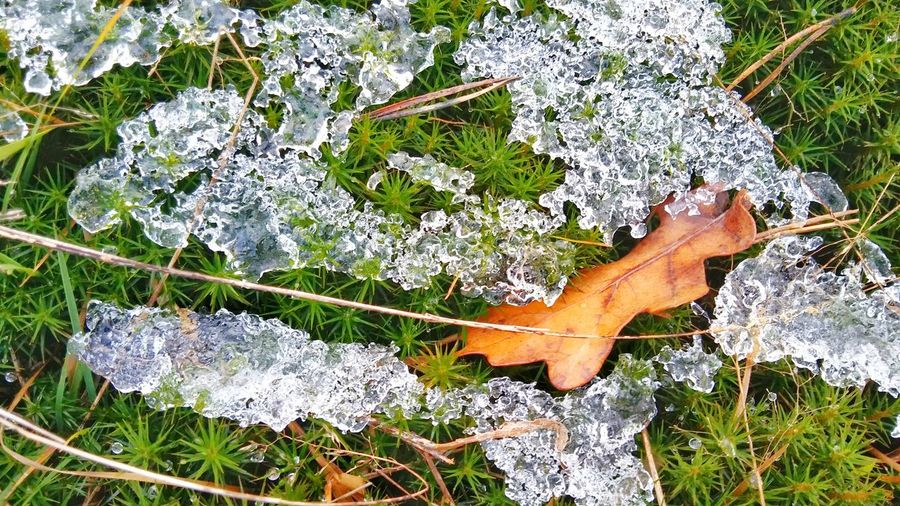 High angle view of frozen water on grass