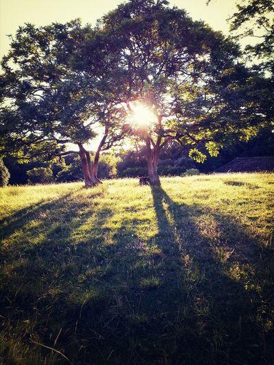 Sunshine ☀ Natureza, Sítio  Respirando Verde!  OlharCurioso