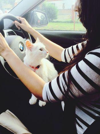 POTD Eyemphotos Cat Driving Bmw Tuesday Wecool Roadtrippin Today Love