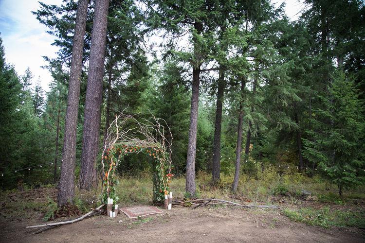 Tree Plant Land