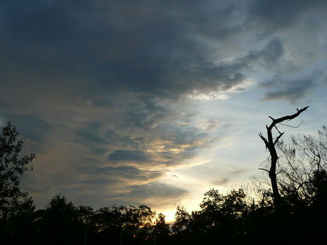 Beautiful Nature Kakadu National Park Relaxing Beauty In Nature Beauty In Nature Cloud - Sky Clouds And Sky Day Growth Kakadu Litchfield Litchfield National Park Low Angle View Nature No People Outdoors Scenics Silhouette Sky Tranquility Tree