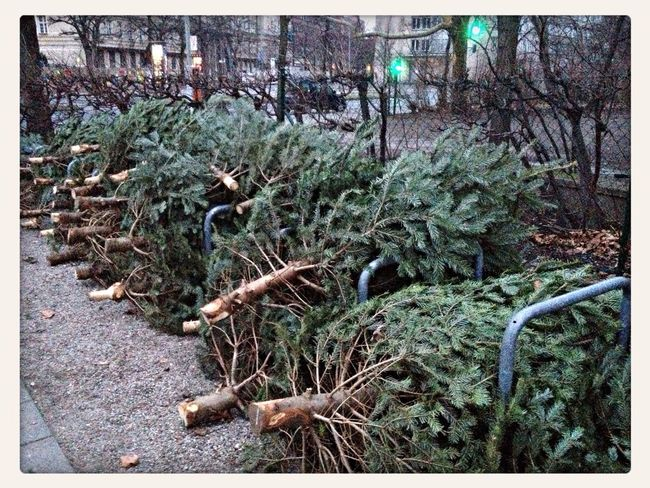 Where does a Christmas Tree go to die? Walking Around Berlin Taking Photos