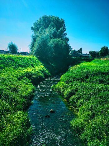 Kortemark Green River
