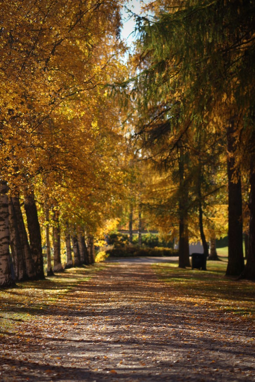 tree, plant, autumn, direction, the way forward, change, nature, beauty in nature, tranquility, forest, footpath, land, plant part, day, leaf, growth, no people, tranquil scene, outdoors, road, treelined, diminishing perspective, woodland, leaves