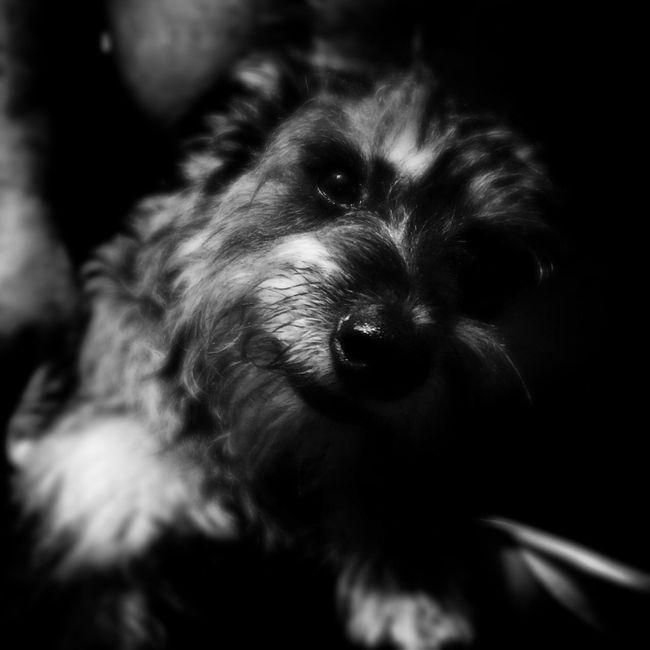 Sr. Yolotl Pet IPhoneography Urban@ndante Dog Blackandwhite Monochrome