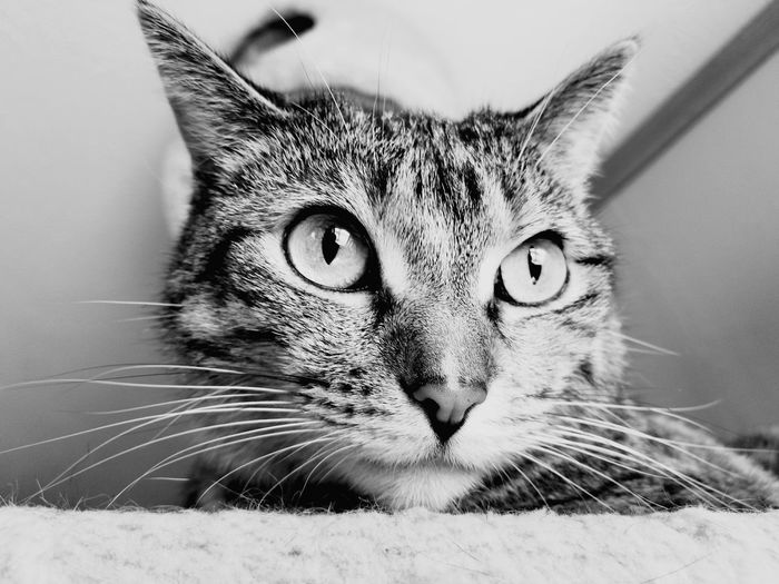 Cats Of EyeEm Cat Lovers Cat♡ Kansas Low Angle View Blackandwhite Animal Photography Blackandwhite Photography Pets Portrait Feline Domestic Cat Looking At Camera Whisker Close-up Animal Eye Animal Head  Cat Alertness Animal Face