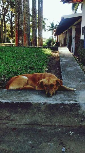 Dog Lazy Dog