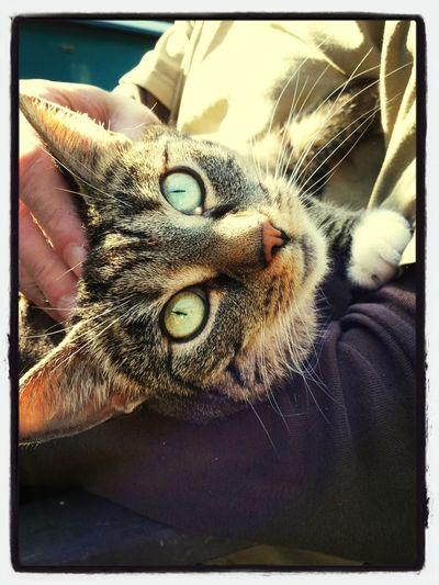 Cat Sunny Day Crazy Cat