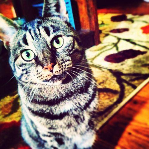 my beautiful kitty cat