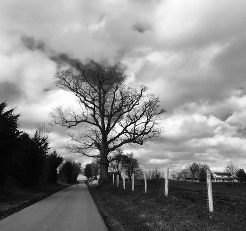 🎚 Tree Sky Nature Cloud - Sky No People Bare Tree Tranquility Outdoors The Way Forward Tranquil Scene Day Road Beauty In Nature Landscape Scenics