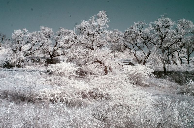 Infrared image trees on field against clear sky