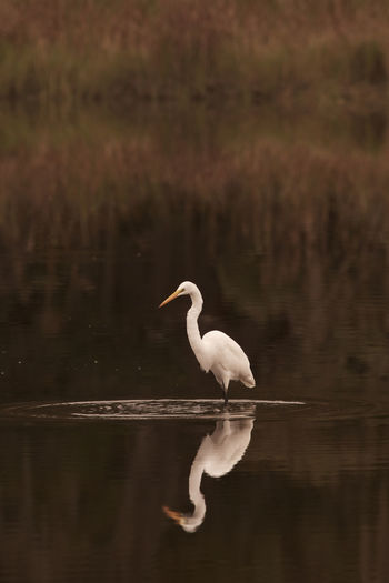 Animal Themes Animal Wildlife Animals In The Wild Bird Day Egret Lake Nature No People One Animal Outdoors Reflection Tranquility Water Waterfront