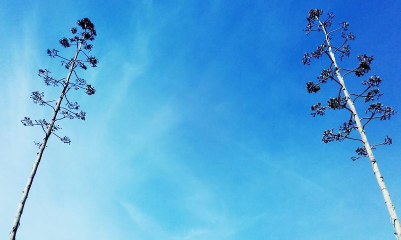 Lines In The Sky Trees Blue