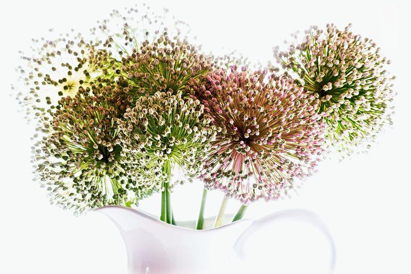 Leeks blooms Flowers Flower Flowers,Plants & Garden Fresh Cut Simplebeauty  Minimalist Photography