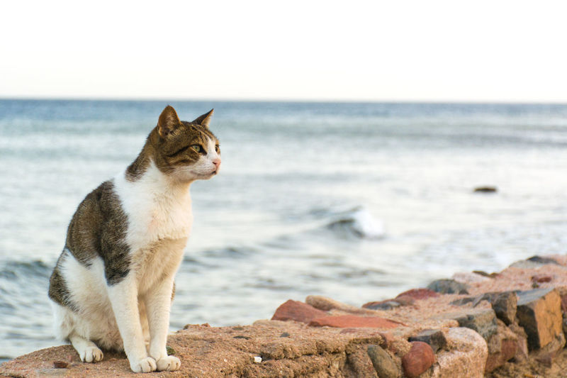 View of a cat on beach