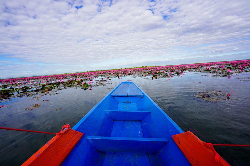 Kumphawapi Red Lotus In Thailand Red Lotus Thailand Red Lotus Lake ทะเลบัวแดง
