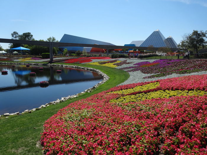 Scenic view of red flowering plants against sky