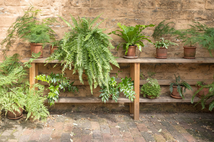 Ferns and greenery in terracotta pot plants on wooden shelf Plant Growth Potted Plant Nature No People Day Leaf Plant Part Architecture Wall - Building Feature Outdoors Built Structure Green Color Wood - Material Gardening Shelf Herb Front Or Back Yard Wall Flower Pot