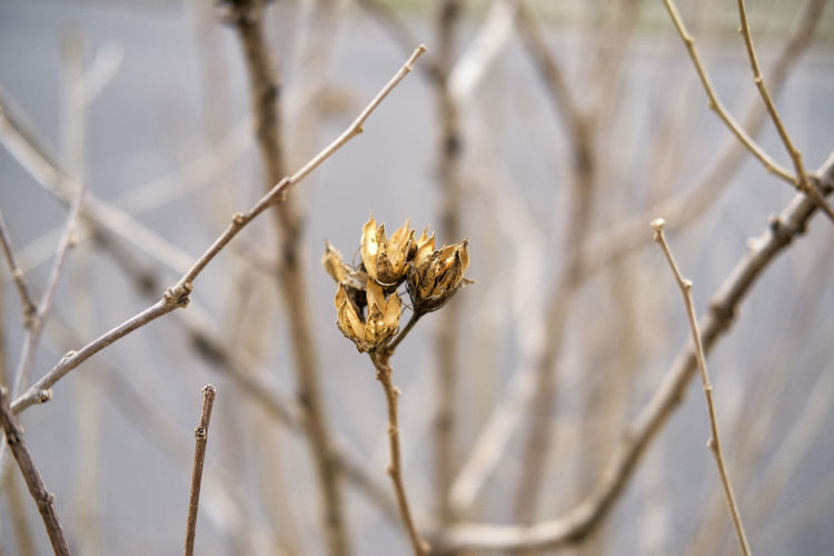 Winter Nature Outdoors Day Close-up Nature Beauty In Nature Shallow Depth Of Field Winter Wilted Wilted Flower Wilted Plant LifeLess Branch Branches