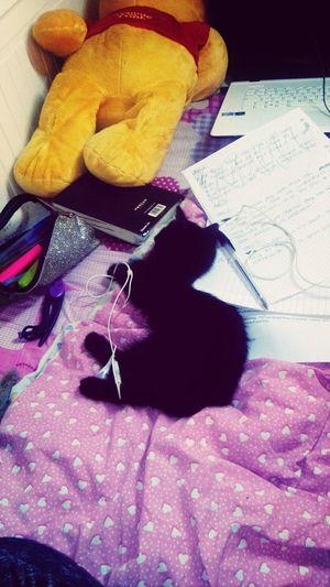 My cat is sleeping in my homework, ok..♡ Cat♡