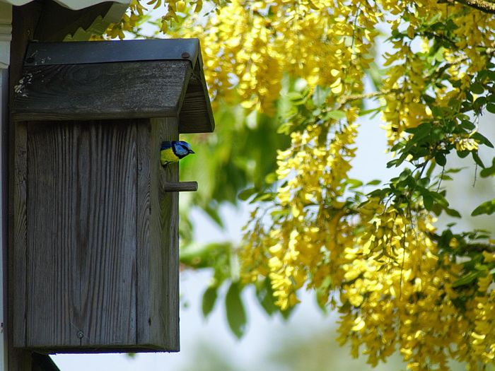 Great Tit, Birdhouse Tree Plant Nature Day Animal Wildlife Animal No People Wood - Material Animal Themes Bird Architecture Animals In The Wild Built Structure Focus On Foreground Vertebrate Green Color Growth Hanging Plant Part Outdoors