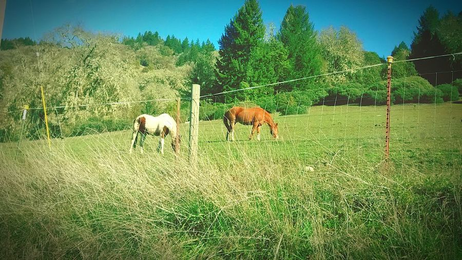 Equestrian Horses <3 Equestrian Country Life Country Living <3 Taking Photos Enjoying Life Hello World Relaxing Check This Out Matterifics World Matterifics Cool World