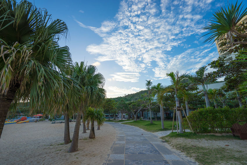 Autumn Beach Blue Sky EyeEm Holiday Ocean OKINAWA, JAPAN Onna-son Onna-village Palm Trees Resort Hotel Sky Summer Sunrise Tree Vacations