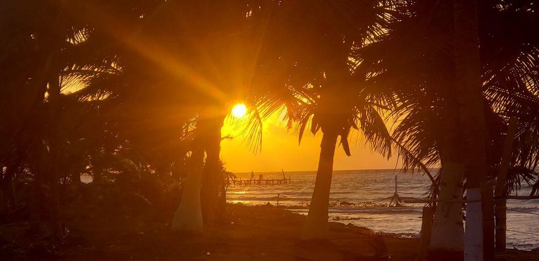 The Traveler - 2019 EyeEm Awards Tree Water Sea Sunset Beach Silhouette Sunlight Sun Palm Tree Social Issues
