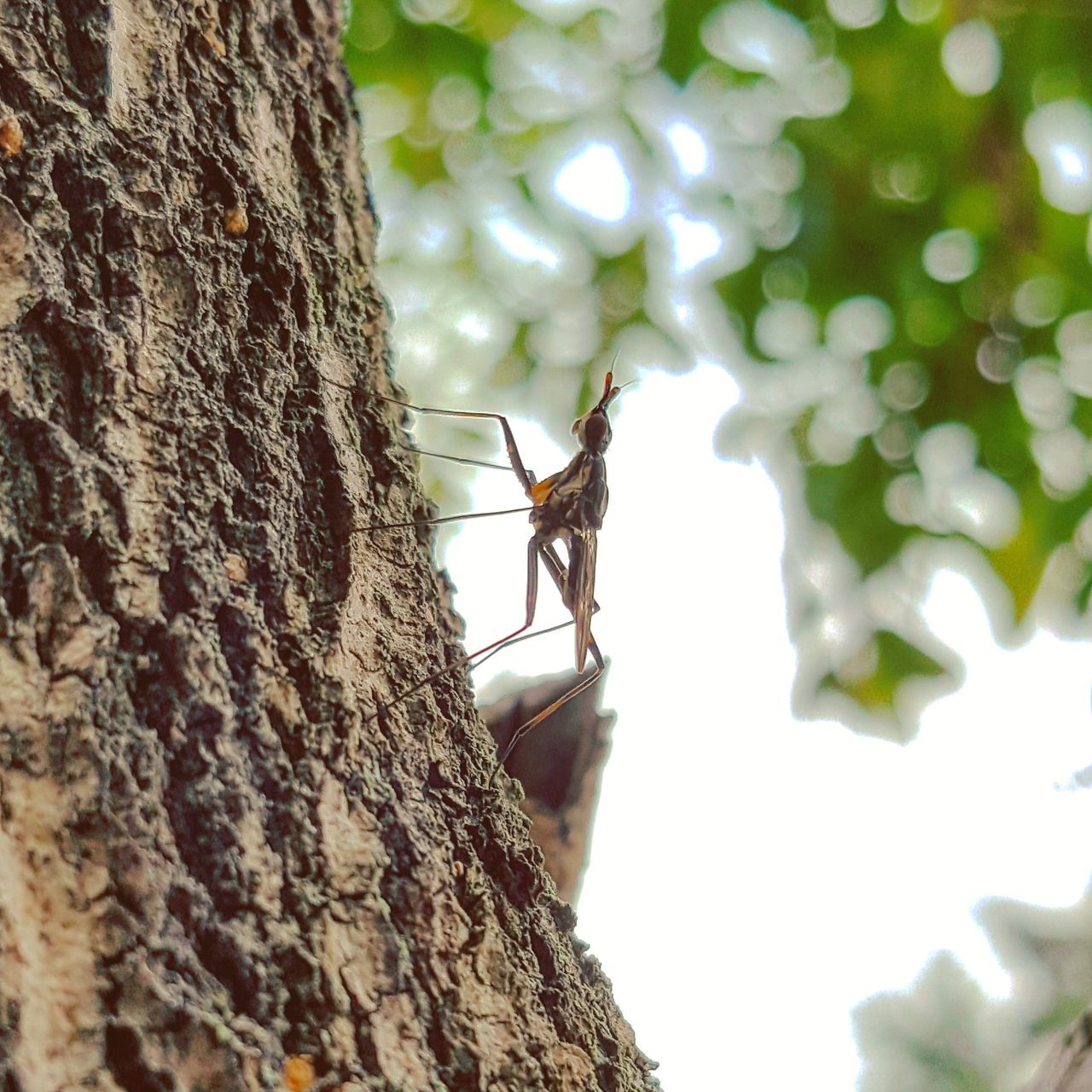 insect, tree trunk, tree, animals in the wild, one animal, animal themes, nature, no people, day, animal wildlife, close-up, outdoors, climbing