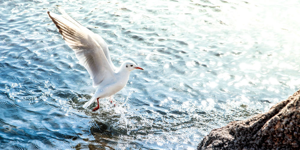 Animal Themes Animal Wildlife Animals In The Wild Beauty In Nature Bird Close-up Day Flying Nature No People One Animal Outdoors Sea Sea Bird Spread Wings Sunlight Water White Color