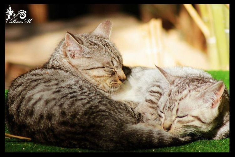Animales Animales Adorables Animales Domesticos Animalessimpaticos Cat Cats Cats Of EyeEm Cats