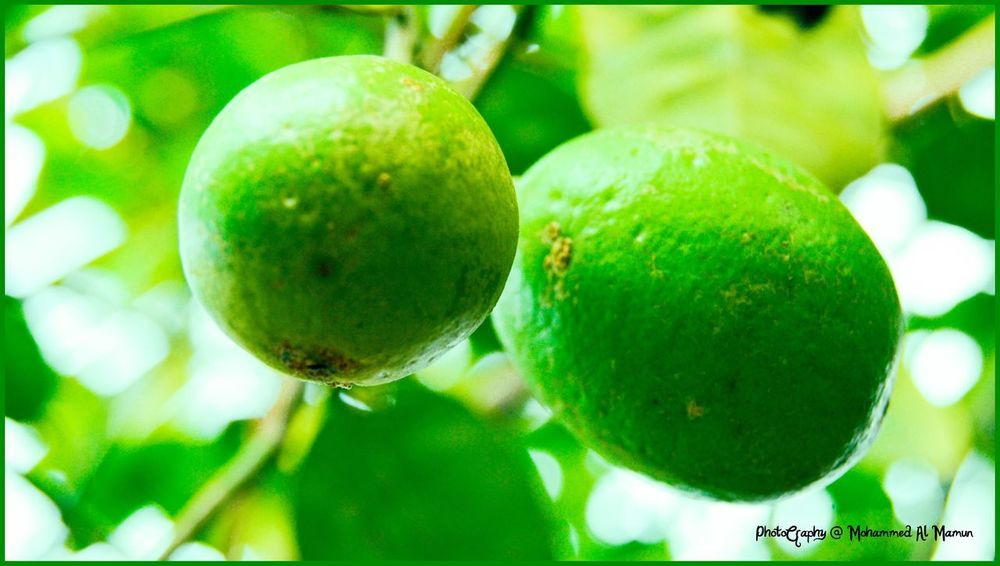 Lime Fresh Lime Fruit Food And Drink Green Color Food Healthy Eating Freshness Growth Close-up Tree No People Outdoors Focus On Foreground Day Nature Beauty In Nature