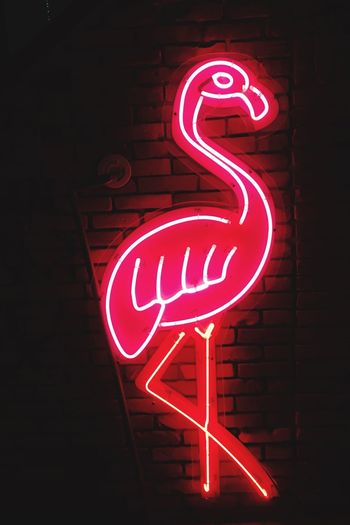 Pink flamingo Neon Neon Lights Tokyo Japan Pink Flamingo Travel Travel Photography