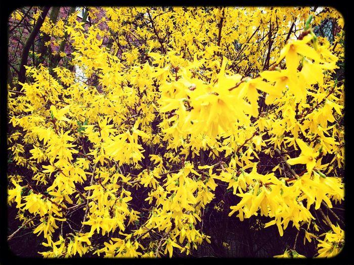 Playground Spring Flowers