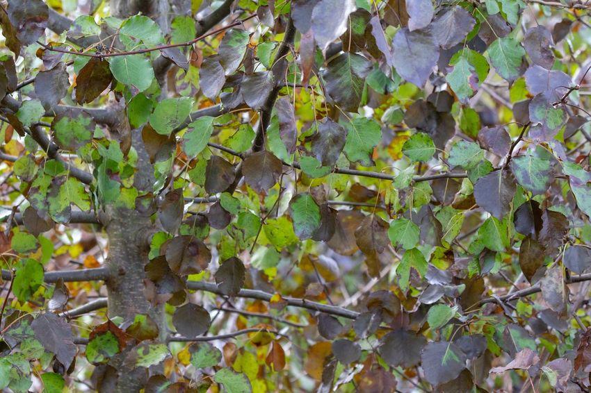 Mosaic Canon EOS 60D Growth Plant Leaf Plant Part Nature No People Green Color