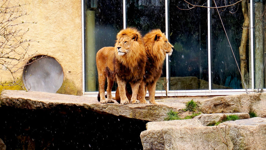View of animal in zoo