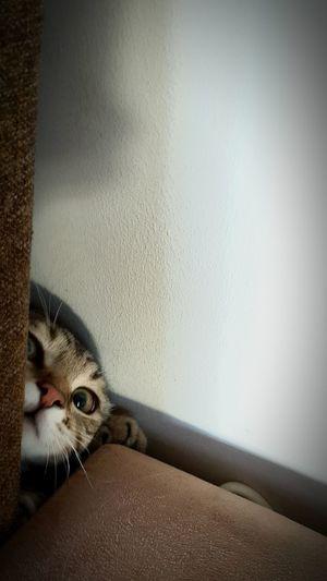 Catsofinstagram Cat♡ Catoftheday EyeEm Animal Lover EyeEm Cips 💗 Domestic Animals Curiosity