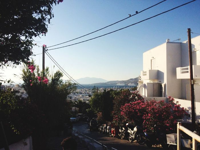 Mountain Clear Sky Flower Architecture Tree Cable Built Structure Building Exterior Blue Mountain Range Growth Pink Color Power Line  Outdoors Scenics Day Nature Beauty In Nature Tourism No People (null)Greece Mykonos First Eyeem Photo