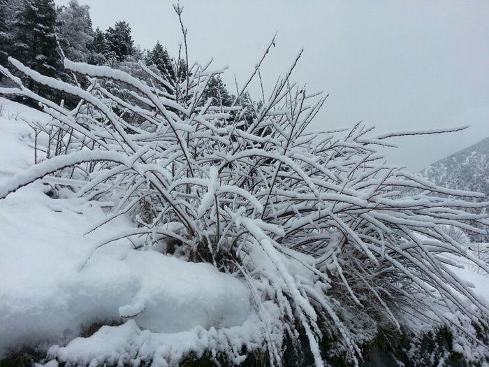 #snow #ganesdeneu #nievepaburrir