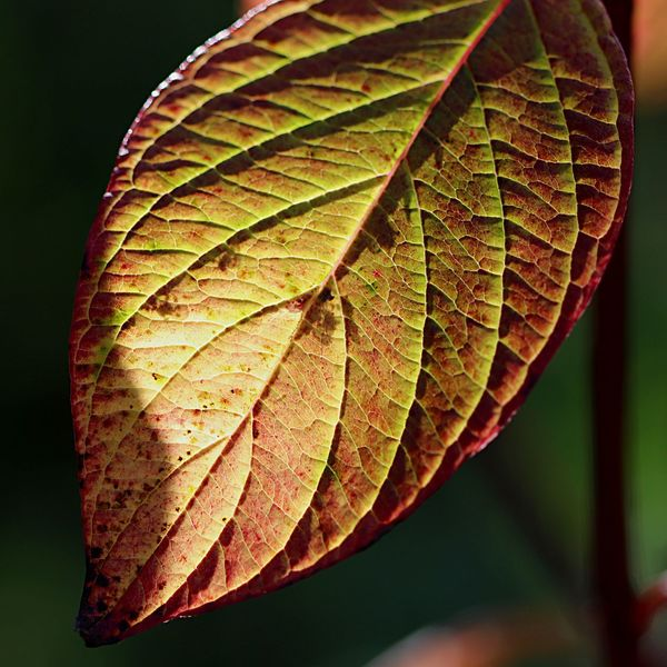 Leaf Plant Part Close-up Plant Nature Growth Beauty In Nature Natural Pattern Focus On Foreground No People Leaf Vein Day Autumn Change Outdoors Vulnerability  Fragility Tranquility Green Color
