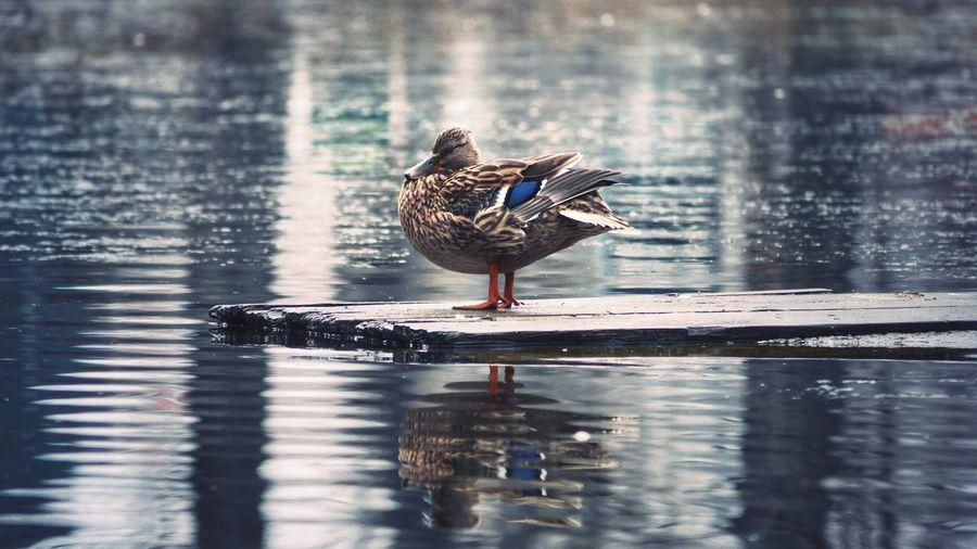 Close-up of bird perching on lake