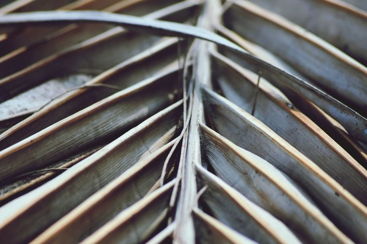 Full frame shot of metal plant