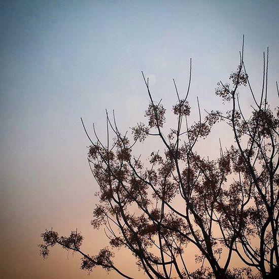 Nature_sicily Siciliaacolori Ilovemysicily Whataboutsicily Verso_sud Kings_sicilia Orizzontimeridionali Likes_sicilia Siciliacam Loves_sicilia Sicilia_super_pics Strettonelcuore Sicily_tricolors Sicilianjourney Igersmessina Top_sicilia_photo Loves_garden Fiftyshades_of_nature Onlybwflowers Sky_captures Scattaingiro Italiainunoscatto Italy_photolovers Best_sunset Sunsetpic nofilter sunset_vision italia_bestsunset sunset_pics bestsunsetpic