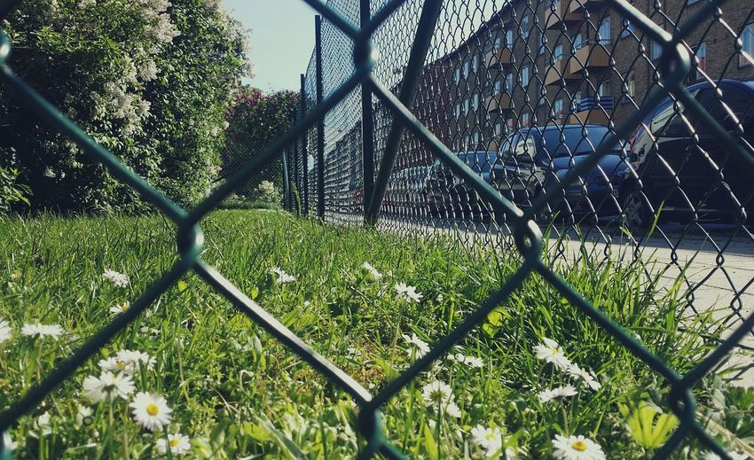 Streetphoto_colo