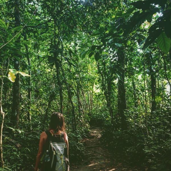 Wanderlust Wandering Wanderer Path In Nature Pathfinder Where The Wild Things Are Where To Go? Alice In Wonderland Lost In The Woods Rainforest Cahuita National Park Cahuita Finding My Way Finding Beauty Backpacking Backpacker